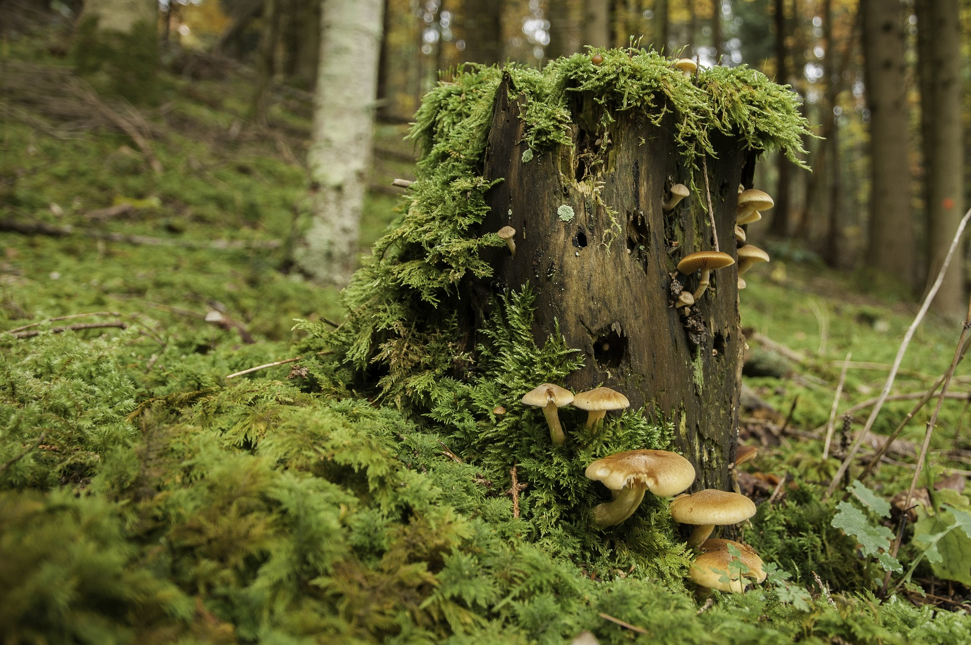 Diese Einflüsse schaden Holz