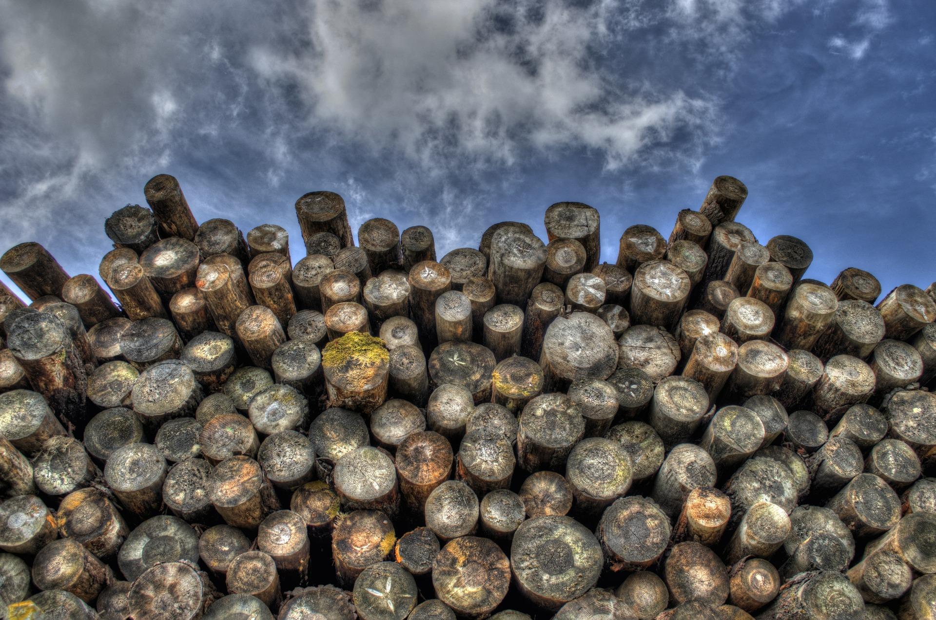 Die genialen Eigenschaften von Holz
